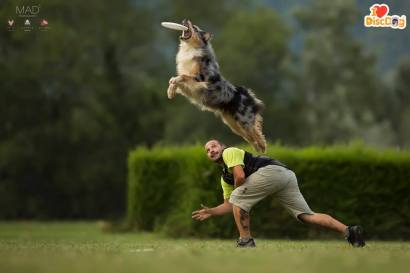 From 2017 I LOVE DISC DOG competition